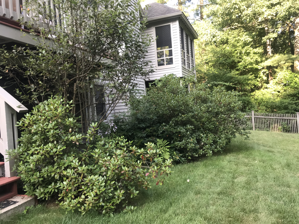 20190513 pruning before
